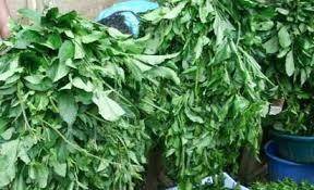 ugu leaf