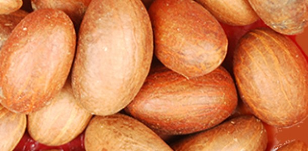 Utazi : Nutritional and Medicinal Benefits